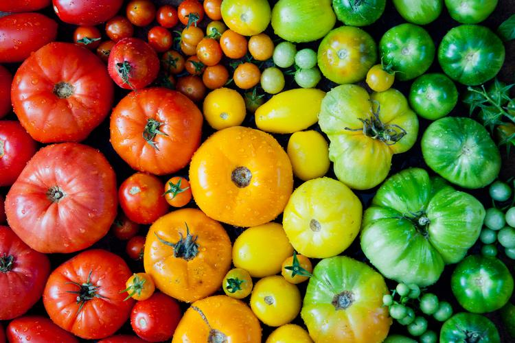 different-types-of tomatoes